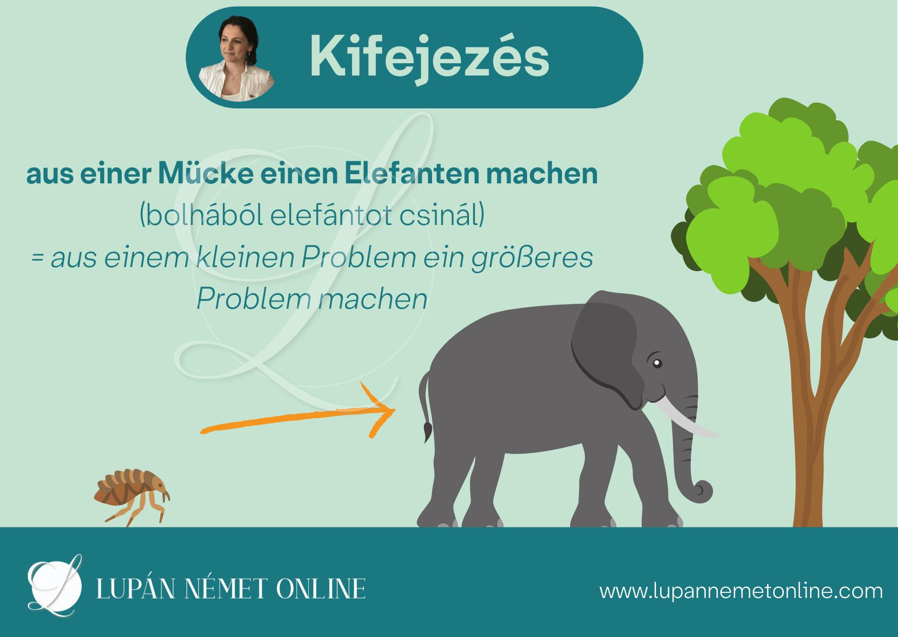 bolhabol_elefant